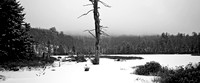 DeadTree_and_Fog_BinneyPond